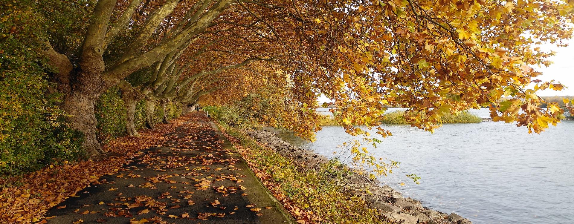 HerbstamRhein